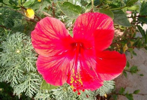 Предыдущая галерея фото цветов